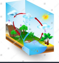 water cycle diagram vector condensation evaporation and environment  [ 1365 x 1600 Pixel ]