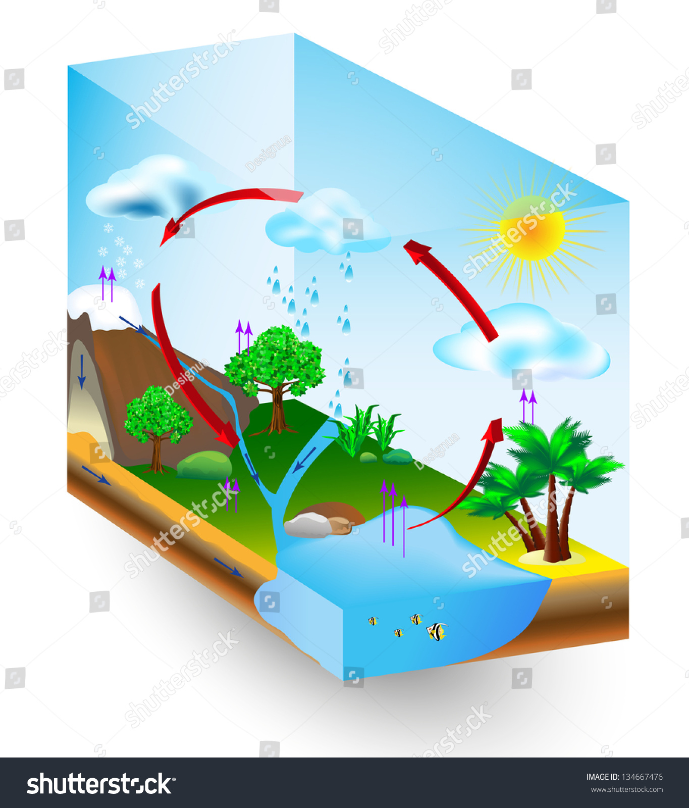 hight resolution of water cycle diagram vector condensation evaporation and environment
