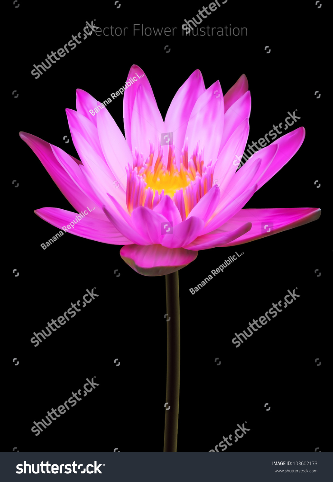 lotus in water plant diagram 5 pin relay wiring fuel pump lily flower vector illustration wild