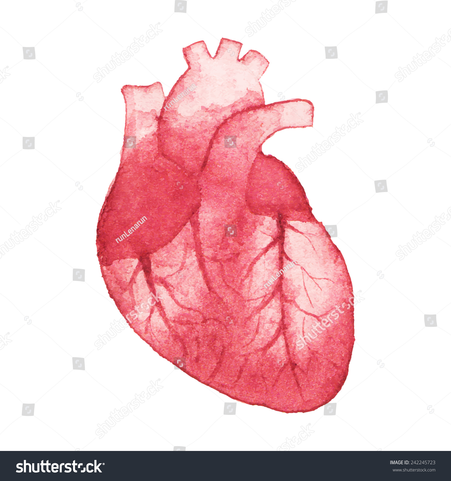 realistic heart diagram 2008 chevy trailblazer parts watercolor on white background stock