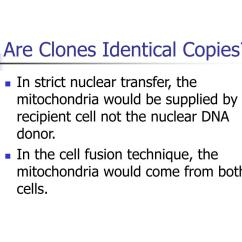 Dolly The Sheep Cloning Diagram Simple Blank Animal Cell Ppt Powerpoint Presentation Id 101331