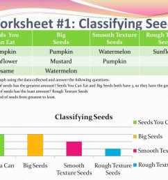 Classifying Plants Worksheets   Printable Worksheets and Activities for  Teachers [ 768 x 1024 Pixel ]