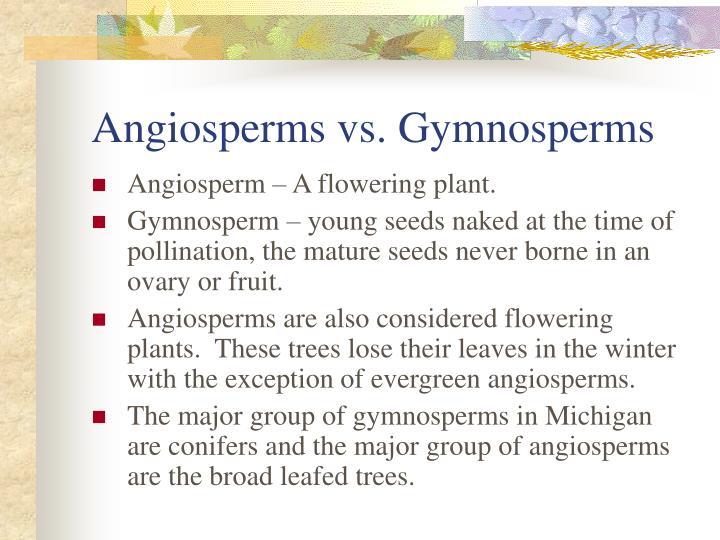 angiosperm vs gymnosperm venn diagram