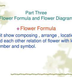 diagram of flower part [ 1024 x 768 Pixel ]