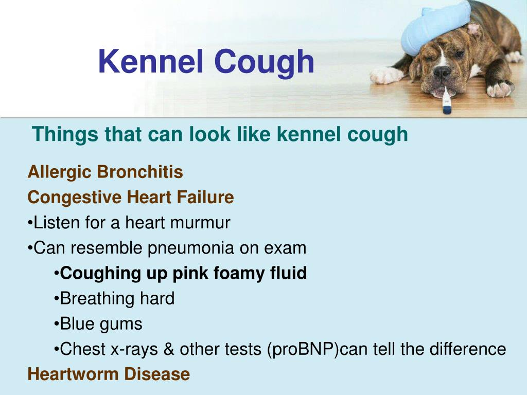 PPT - Canine Influenza Virus PowerPoint Presentation free ...