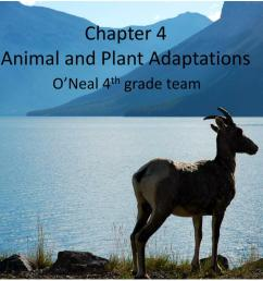 PPT - Chapter 4 Animal and Plant Adaptations PowerPoint Presentation [ 768 x 1024 Pixel ]