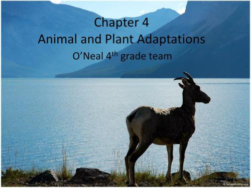 small resolution of PPT - Chapter 4 Animal and Plant Adaptations PowerPoint Presentation