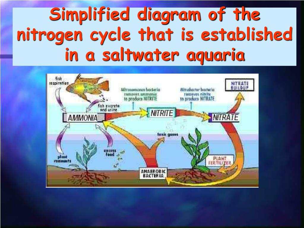 hight resolution of simplified diagram of the nitrogen cycle that is established