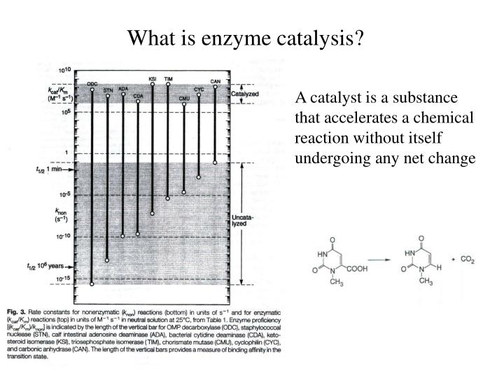 PPT - What is enzyme catalysis? PowerPoint Presentation ...