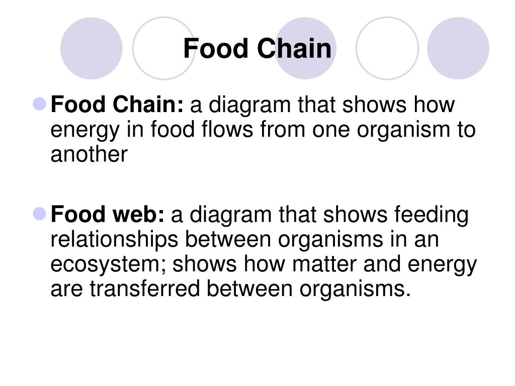 wolf food chain diagram honeywell c plan wiring ppt interactions of living things powerpoint
