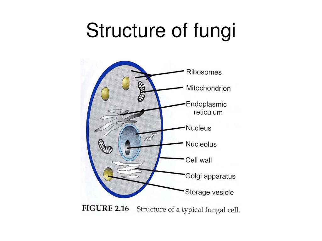 fungus cell diagram labeled chinese atv wiring 110cc fungal