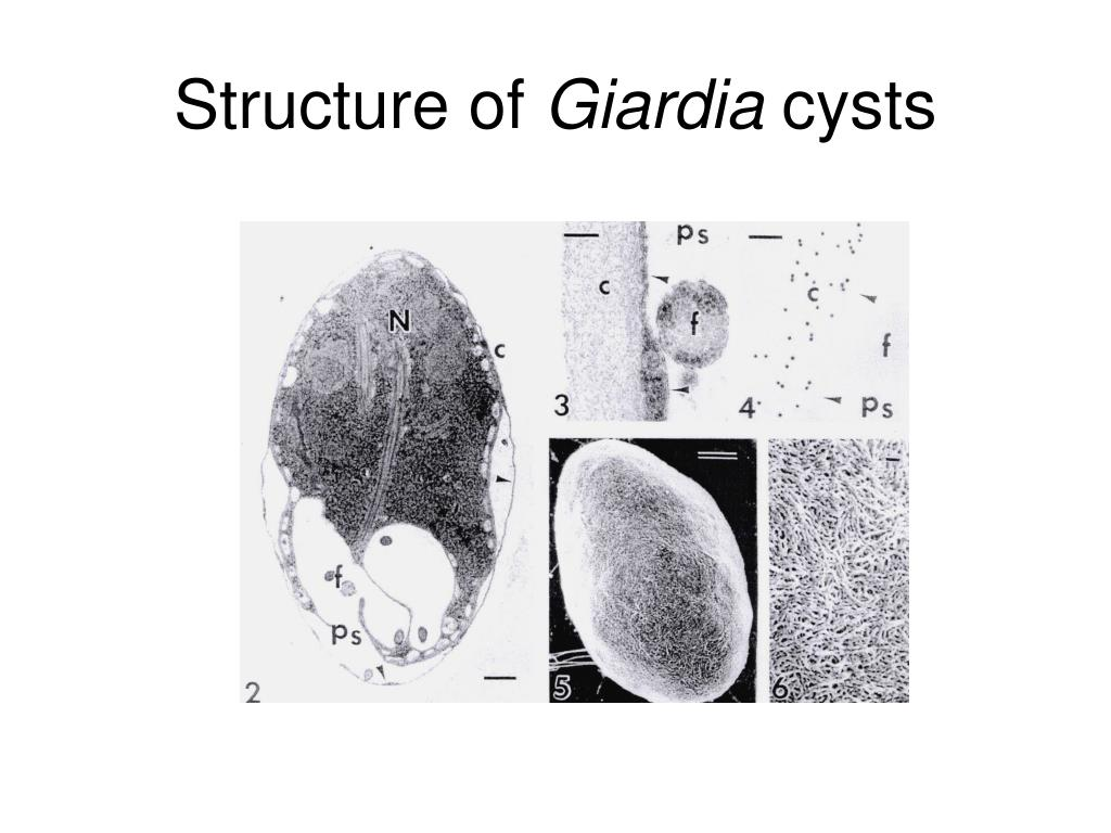 Fungi Cell Structure | Wiring Diagram Database