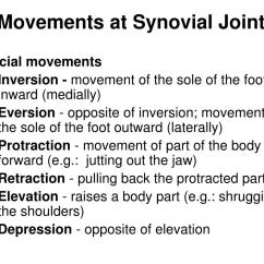 Movements Allowed By Synovial Joints Diagram Symantec Endpoint Protection Architecture Movement Depression Pictures To Pin On Pinterest