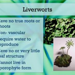 Non Vascular Plant Diagram Kubota Dynamo Wiring Ppt Plants And Ferns Powerpoint