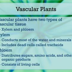 Non Vascular Plant Diagram Switch Loop Wiring Ppt Plants And Ferns Powerpoint