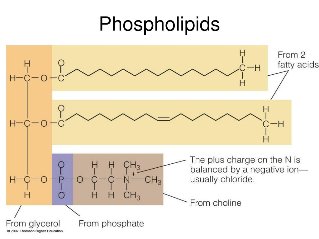 PPT - Chapter 5 The Lipids: PowerPoint Presentation - ID ...