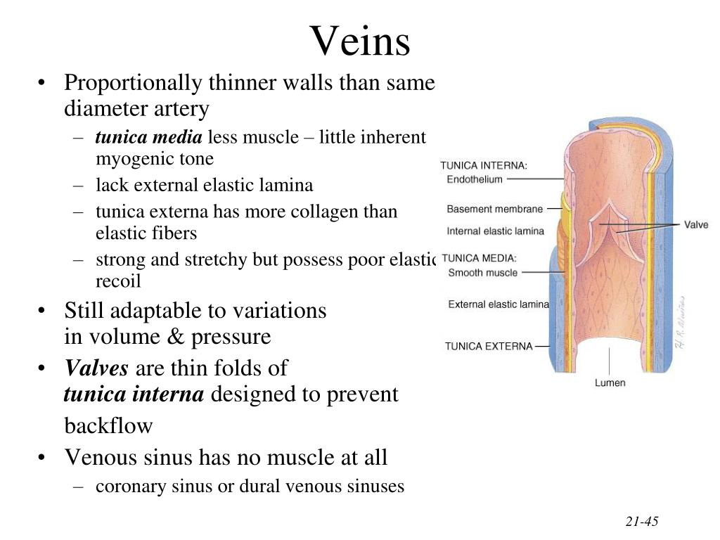 PPT - Blood Blood Vessels & Circulation PowerPoint ...