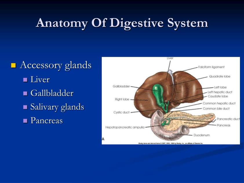 PPT - Radiography of the GI System PowerPoint Presentation ...
