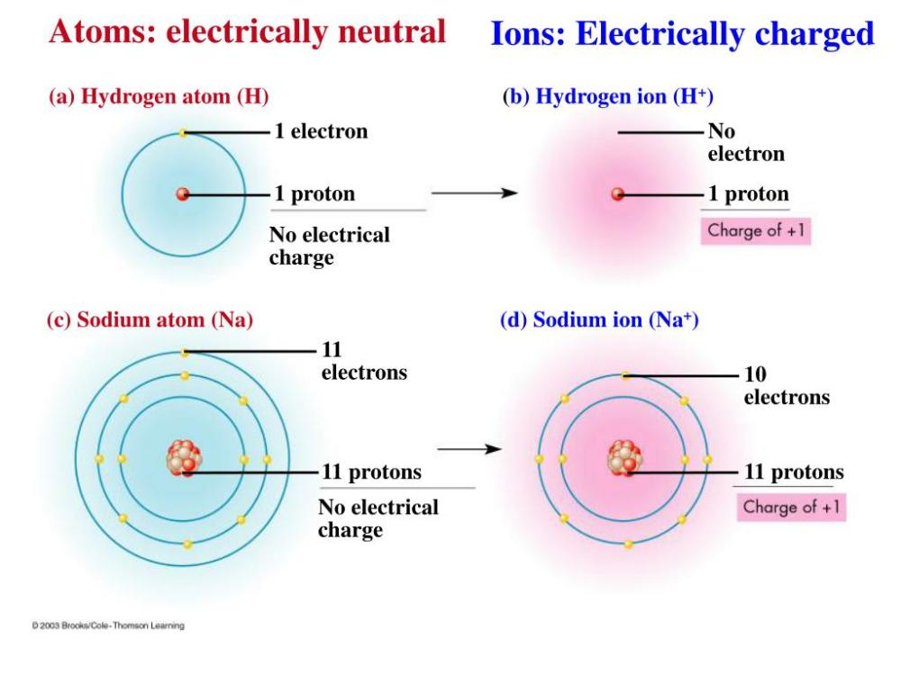 medium resolution of ppt unifying characteristics of life powerpoint atom electrically neutral entity atom electrically neutral entity