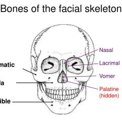 Facial Bones Diagram Not Labeled 3 Phase 4 Pin Plug Wiring Australia Ppt The Cranium Is Part Of Skull Surrounding