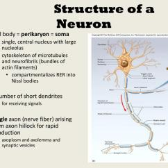 Basic Neuron Diagram Ge Washer Wiring Ppt Subdivisions Of Nervous System Powerpoint