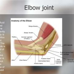 Movements Allowed By Synovial Joints Diagram Tanning Bed Wiring Ppt Muscle And Movement Powerpoint Presentation Id 331322