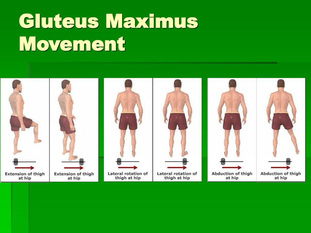 gluteus muscles diagram pain sony xplod xm 5040x of hip flexor human elsavadorla