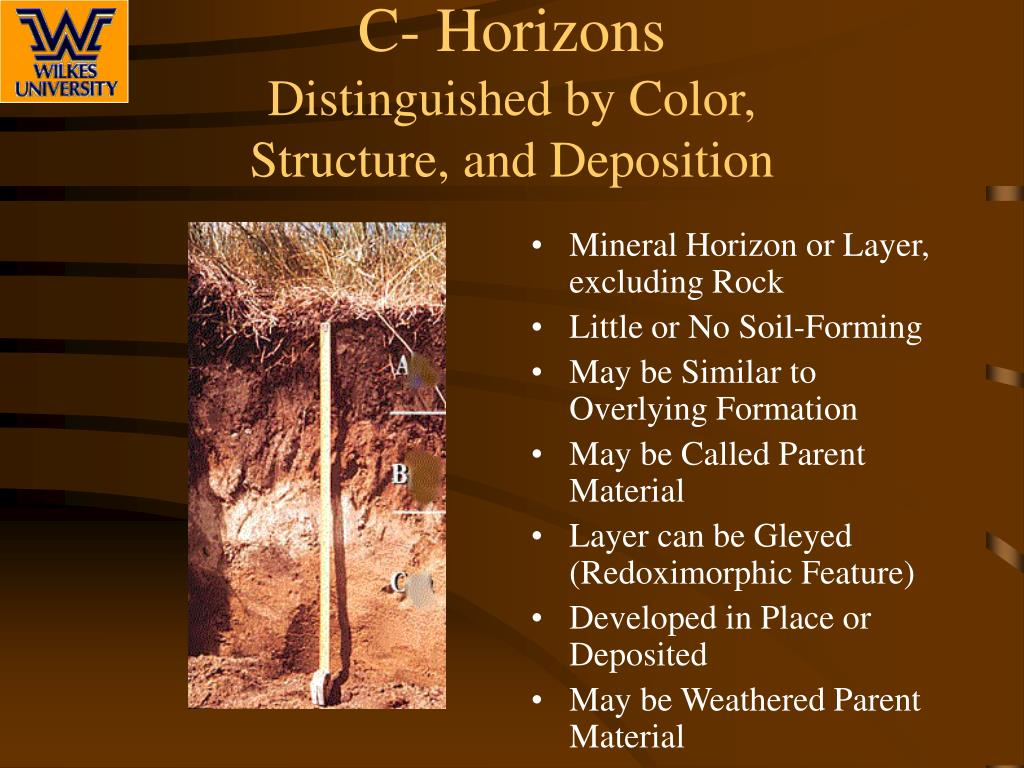 horizon diagram soil formation clarion stereo wiring ppt profile and horizons powerpoint