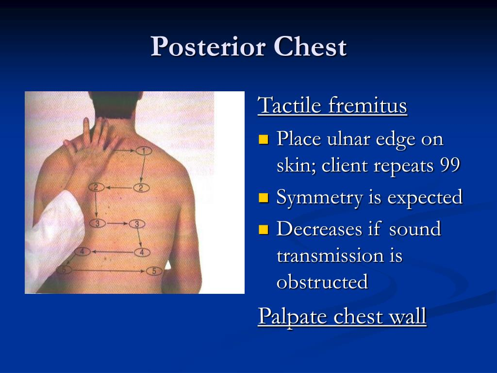 PPT - Assessment of Thorax and Lungs PowerPoint ...