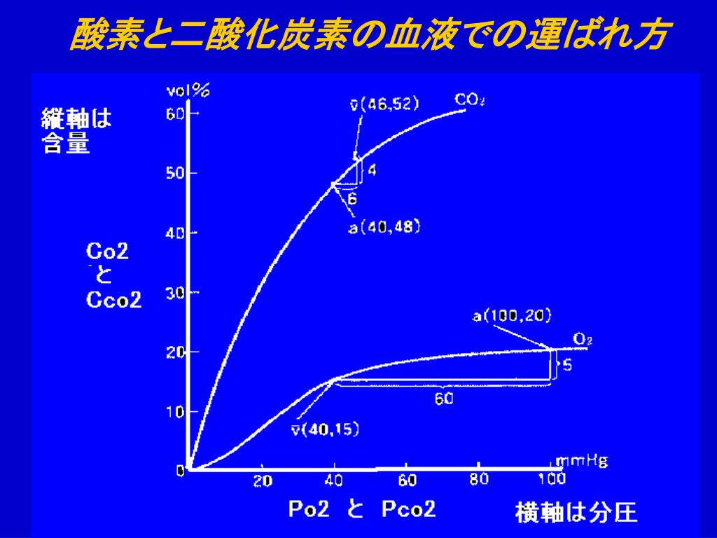 PPT - 血液ガスの基礎 PowerPoint Presentation. free download - ID:542306