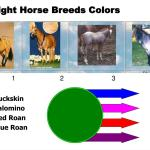 Ppt Light Horse Breeds And Selection Part 1 Powerpoint Presentation Free Download Id 545462