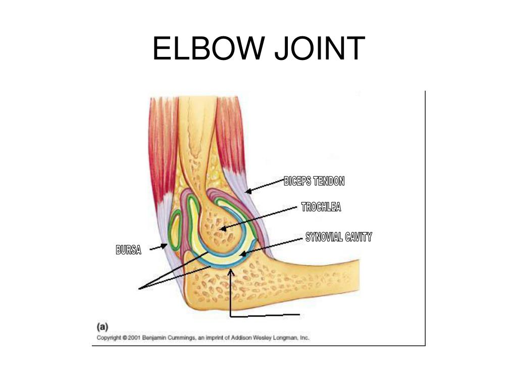 movements allowed by synovial joints diagram 07 suzuki gsxr 750 wiring ppt arthrology powerpoint presentation id 564278