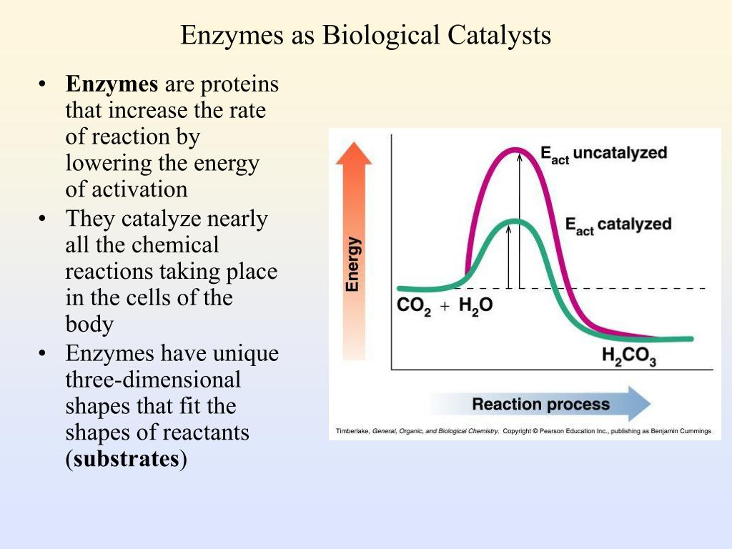 PPT - Enzymes as Biological Catalysts PowerPoint ...