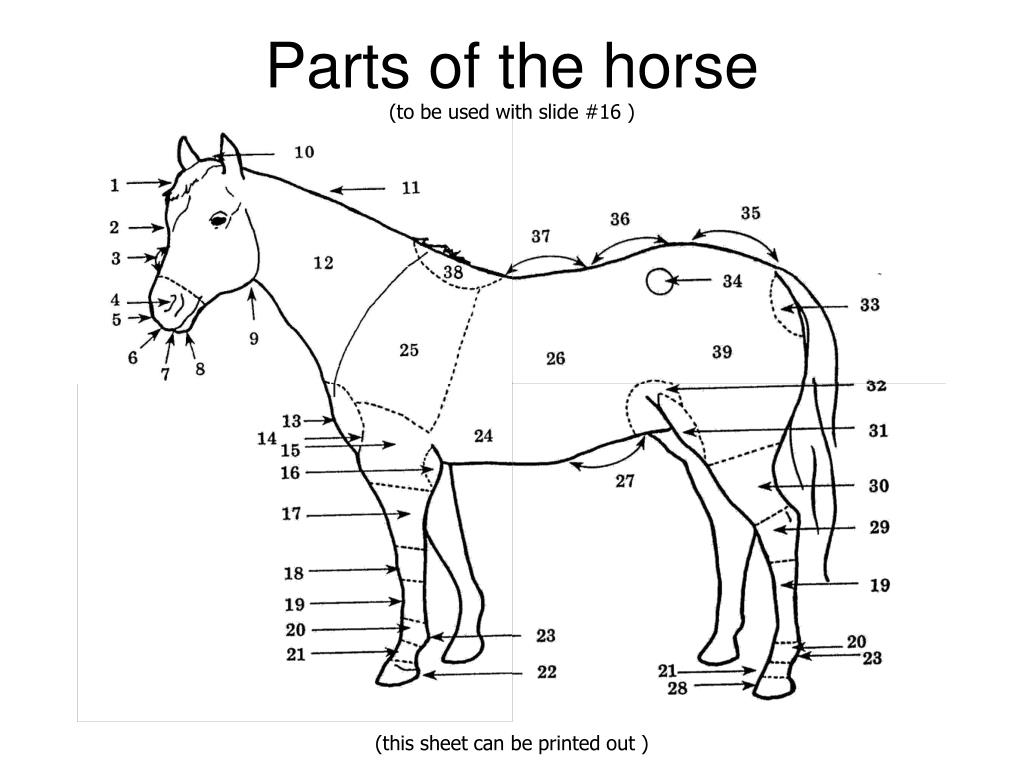 parts of a blank horse diagram how to read wire the gallery for gt perineal massage