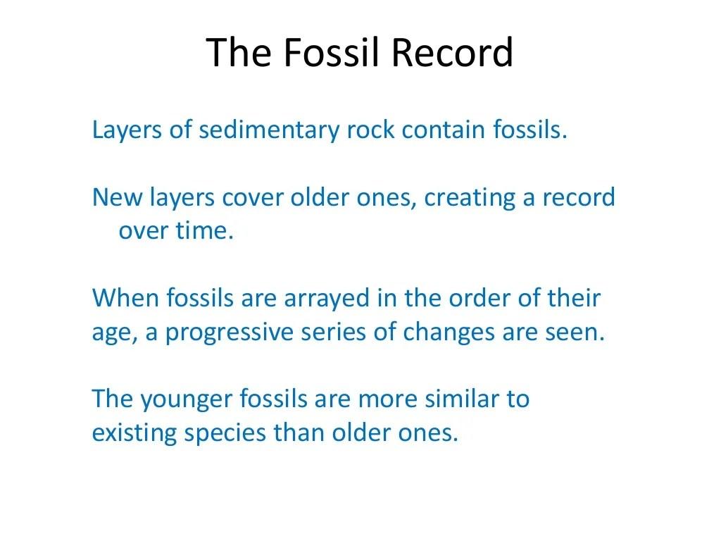 02 Evidence Of Evolution Fossils