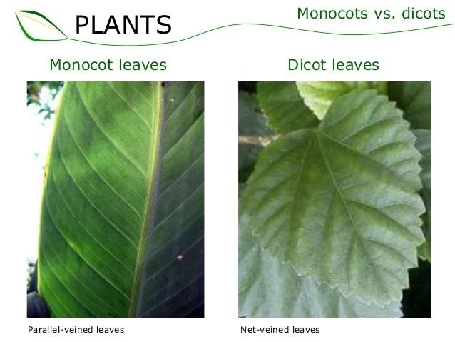 02 Plant Structures