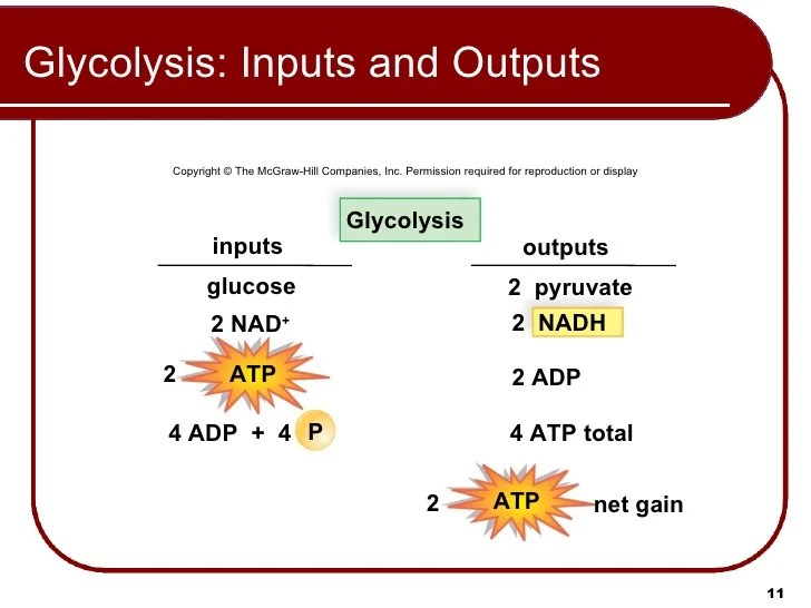 Input Output Glycolysis Plant And