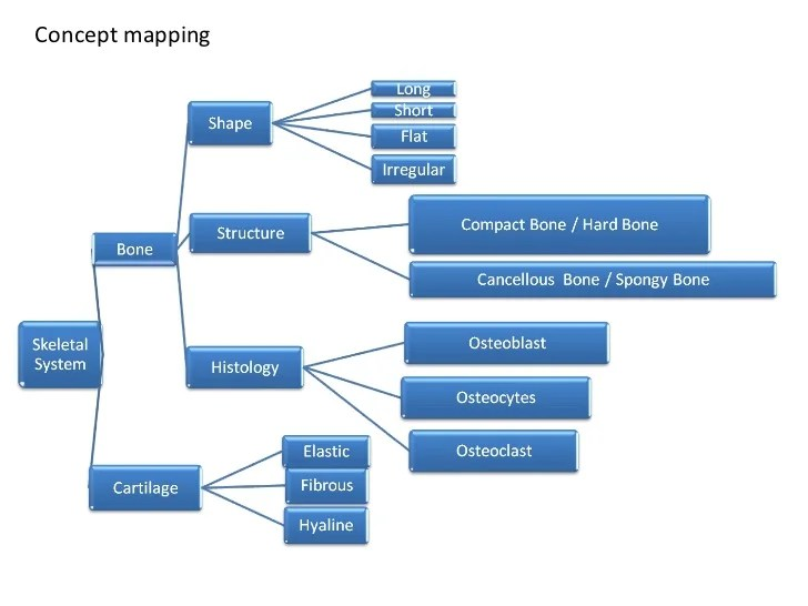 concept map skeletal system diagram pontoon boat wiring 1 3 human movement mapping what is skeleton