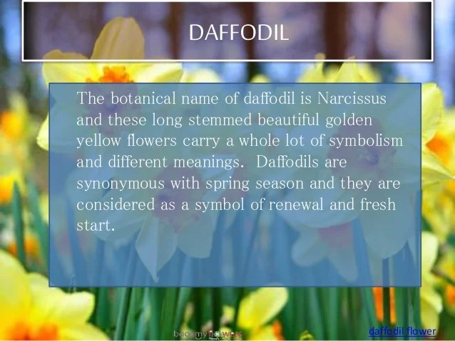 Image result for daffodils meaning