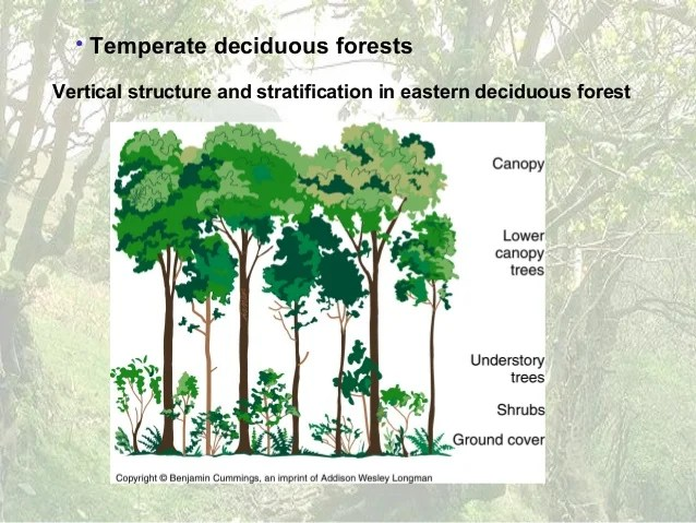 deciduous forest layers diagram pmi knowledge areas 12 forests
