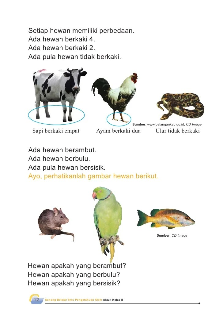 Gambar Hewan Berkaki 2 : gambar, hewan, berkaki, Gambar, Kumpulan, Hewan, Belajar, Mewarnai, Singa, Ilustrasi, Rebanas
