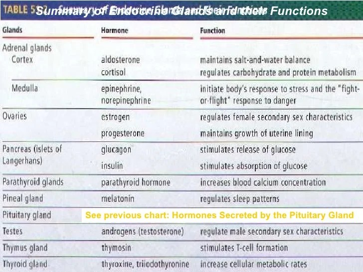 see previous chart hormones secreted by the pituitary gland summary of endocrine also system ppt rh slideshare