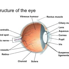 Structure Of Human Eye With Diagram 01 Ford F150 Stereo Wiring Chapter 14 The Lesson 1 Anatomy Summary 17