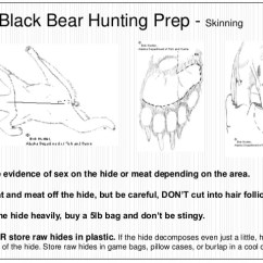 Black Bear Diagram 95 Mustang Gt Alternator Wiring Hunting Data Diagrams Click Bow And Arrow