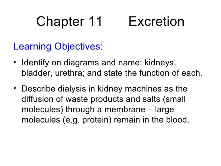 Chapter 11 Excretion Lesson 1  Introduction to Excretion