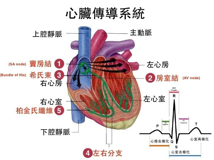 循環系統for EMT