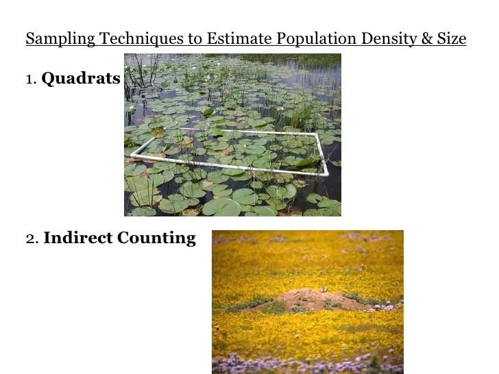 Population Density Calculator Online