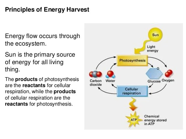 photosynthesis and cellular respiration cycle diagram 1999 ford windstar wiring 2016 cycling of chemicals