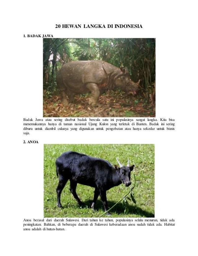 Badak Bercula Satu Berasal Dari : badak, bercula, berasal, Hewan, Langka, Indonesia