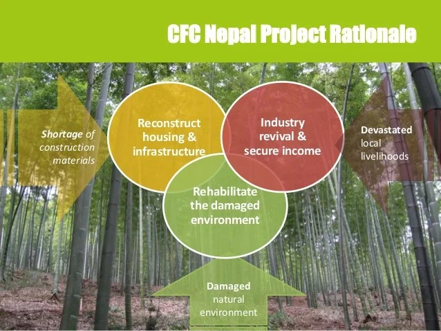 bamboo post disaster reconstruction